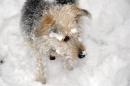 ghini der schneehund04