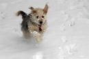 ghini der schneehund05